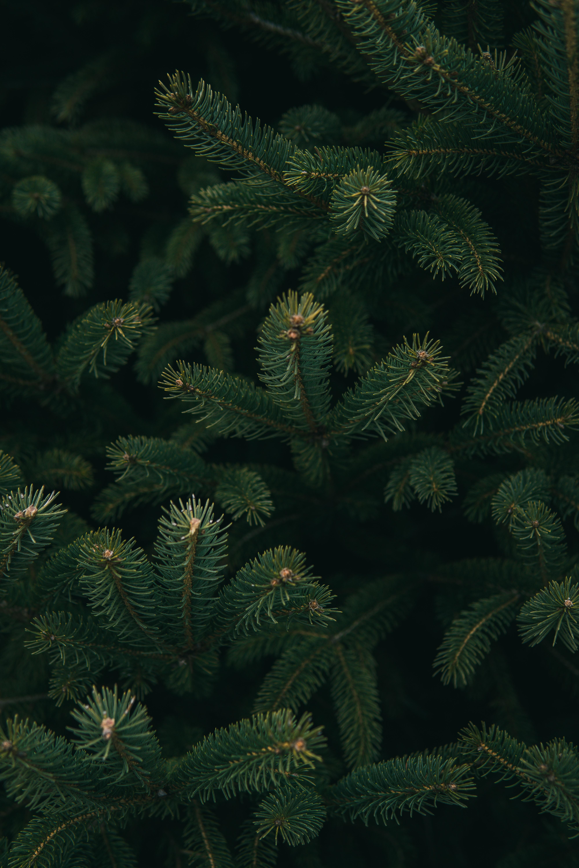 Kerstbomen verhuur